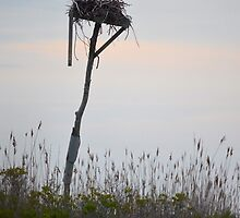 Pandion Haliaetus - Osprey Hawk Couple In Their Nest | Hampton Bays, New York  by © Sophie W. Smith