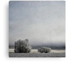 Two Trees in Frost Canvas Print