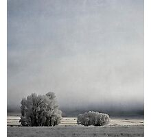 Two Trees in Frost Photographic Print