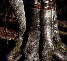 Aspen tree base in HDR by Jeffrey  Sinnock