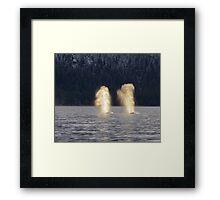 Backlit Whale Blows Framed Print
