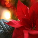 Poinsettia by Isabelle Lafrance