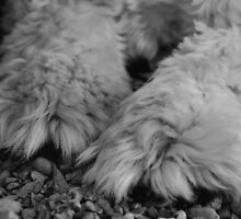 Pawsitively by ShutterUp Photographics