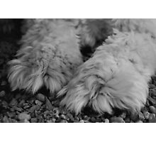 Pawsitively Photographic Print