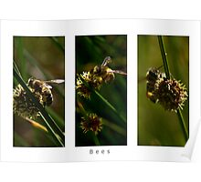 Bee Tryptich Poster