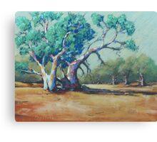 Dry Sandy Riverbed, Silverton Canvas Print