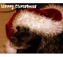 Santa Loves Peppy Photographic Print