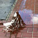 Puddle Reflection by Chris Whitney