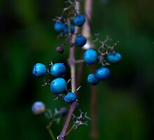 Blue Berries by Brian Walter