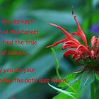 Bee Balm in the forest by Geno Rugh