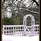 Snowy Morning by Brenda Dow