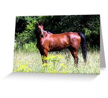 Country Horse Greeting Card