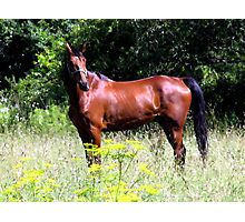 Country Horse Photographic Print