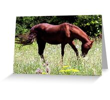 Country Horse 2 Greeting Card