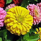 Colorful Flowers by David Shaw