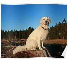 A beautiful sunny day in the wood Poster