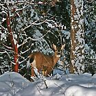 Deer in Winter by James  Birkbeck Animals