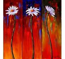 Three White Daisies Photographic Print