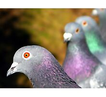 Trial by Pigeon Photographic Print