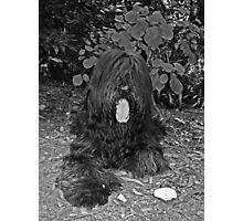 Teddy #3 Photographic Print