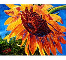 Sunflower in the Sunlight Photographic Print