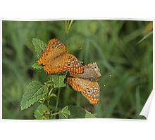 Flirting Butterflies Poster