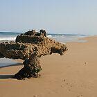 Maheno - Fraser Island by happy3741