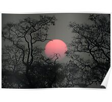 Smoky sunset in Moremi Poster