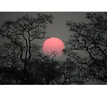 Smoky sunset in Moremi Photographic Print