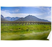 Vinyard with Mountains in the background Poster