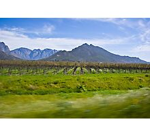 Vinyard with Mountains in the background Photographic Print