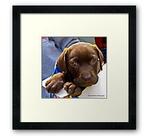 Yes, I Know I'm Gorgeous Framed Print
