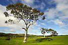 Rolling hills of Lancefield by Darren Stones