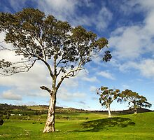 Rolling hills of Lancefield by Darren Stones