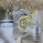 Herons by Dennis Cheeseman
