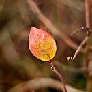to see the autumn by Patrycja Makowska