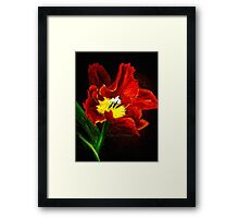 The Red Tulip Framed Print