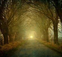 The light is coming by Caterpillar