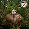 Herne the Hunter by Angie Latham