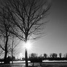 Winter Wonder by Jacinthe Brault