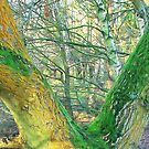 Lichen and moss by relayer51