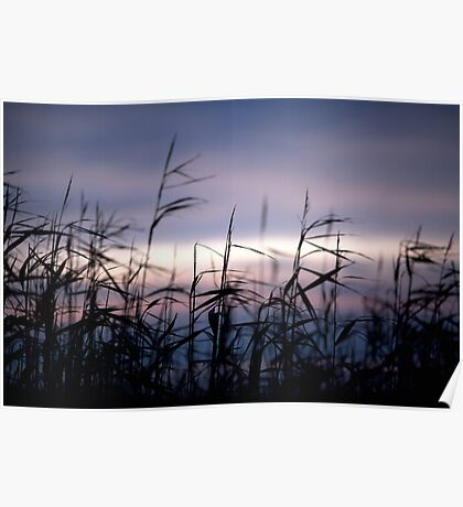 cold sunset - at the beach of Sahlenburg / North Sea Poster