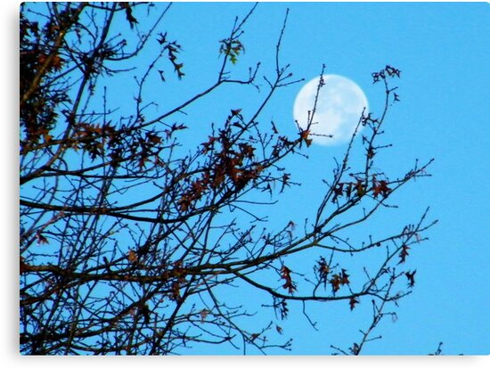 Fall Moon by BShirey