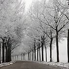 Wintercurve by LarsvandeGoor