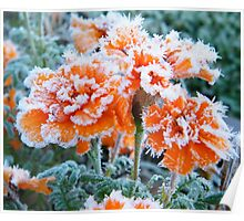 Frosty Marigolds Poster