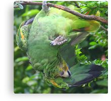 Does this parakeet know which end is up?? Canvas Print