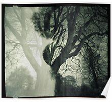 Shadow Tree Wells Park Sydenham Poster