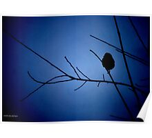 Blue Shadow Bird I Poster