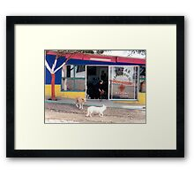 Mexico dogs Framed Print