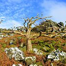 Dartmoor: Beauty in Death by Rob Parsons